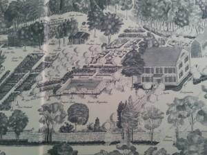 Martha's Garden Sketch