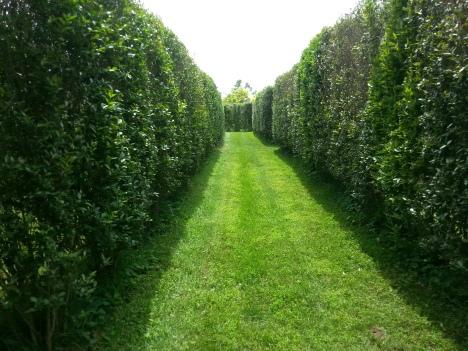 Paxson Hill Farm Maze