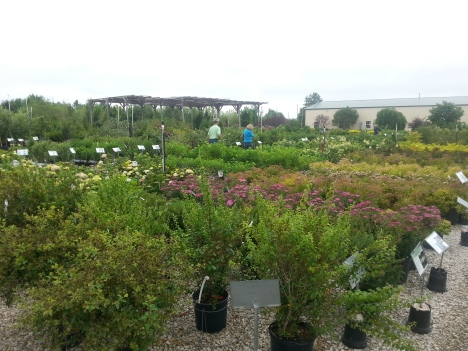 North Branch Nursery Trees