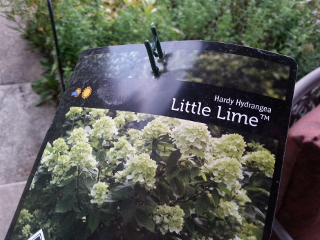 North Branch Nursery Little Lime